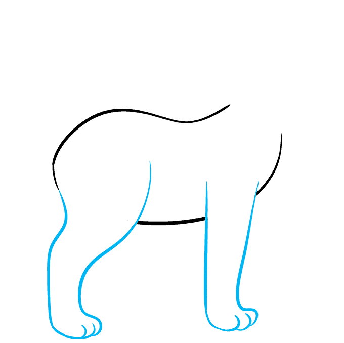 How to Draw Bobcat: Step 2