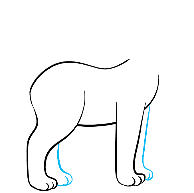 How to Draw Bobcat: Step 3