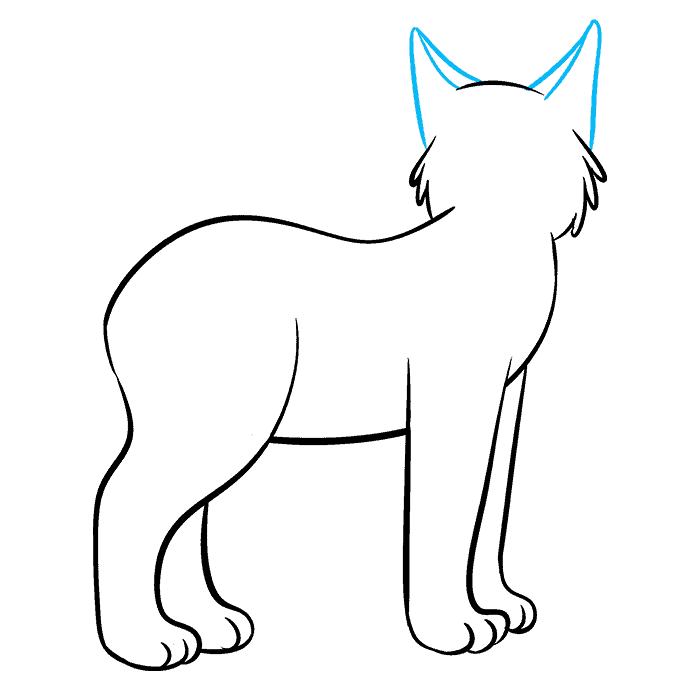 How to Draw Bobcat: Step 5