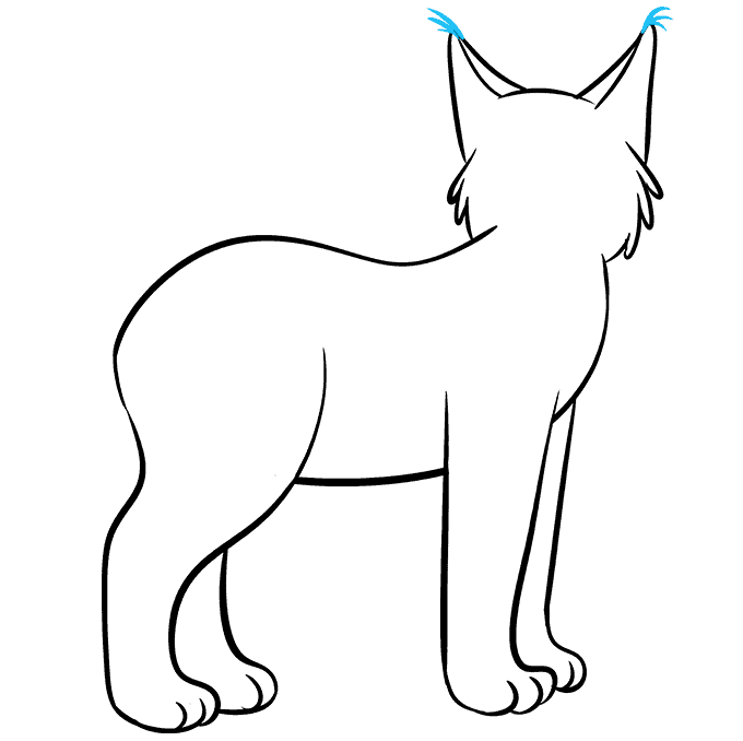 How to Draw Bobcat: Step 6