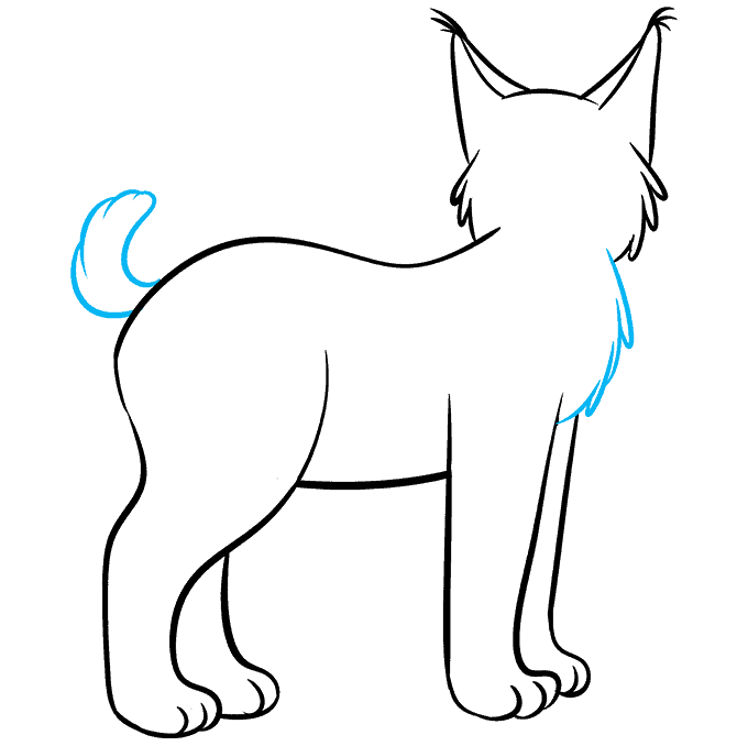 How to Draw Bobcat: Step 7