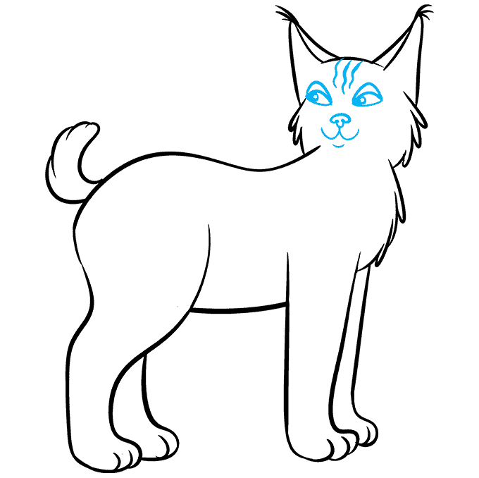 How to Draw Bobcat: Step 8