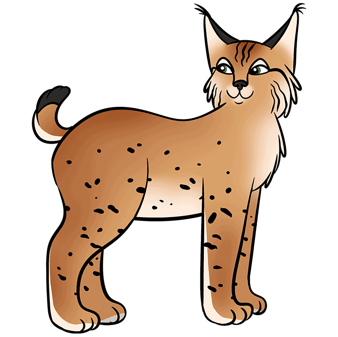 How to Draw Bobcat: Step 10