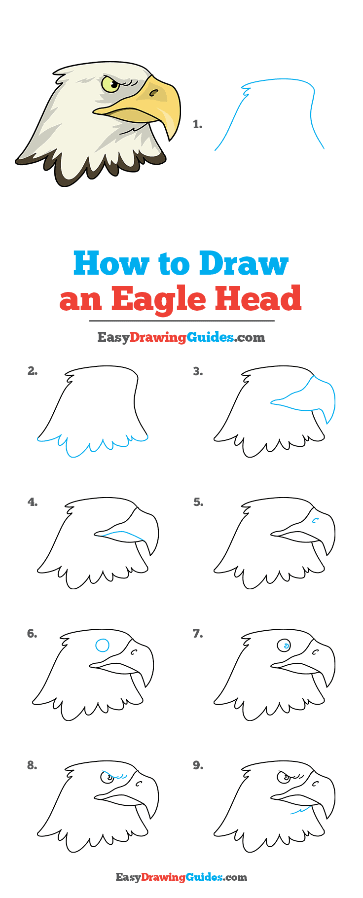 How to Draw Eagle Head