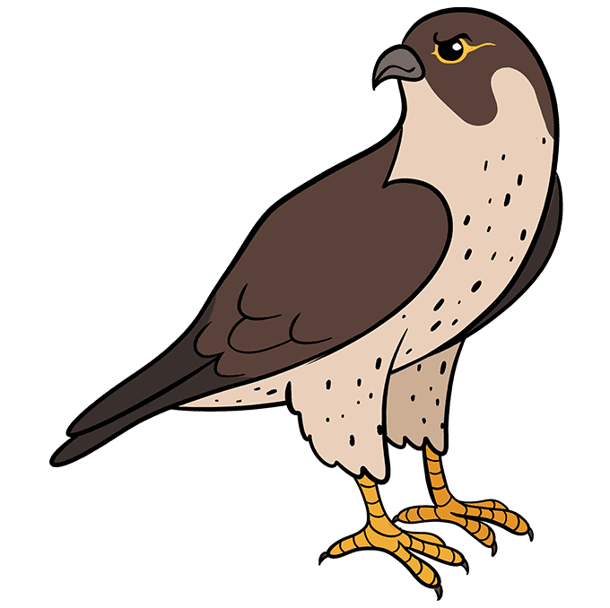 How to Draw Falcon: Step 10