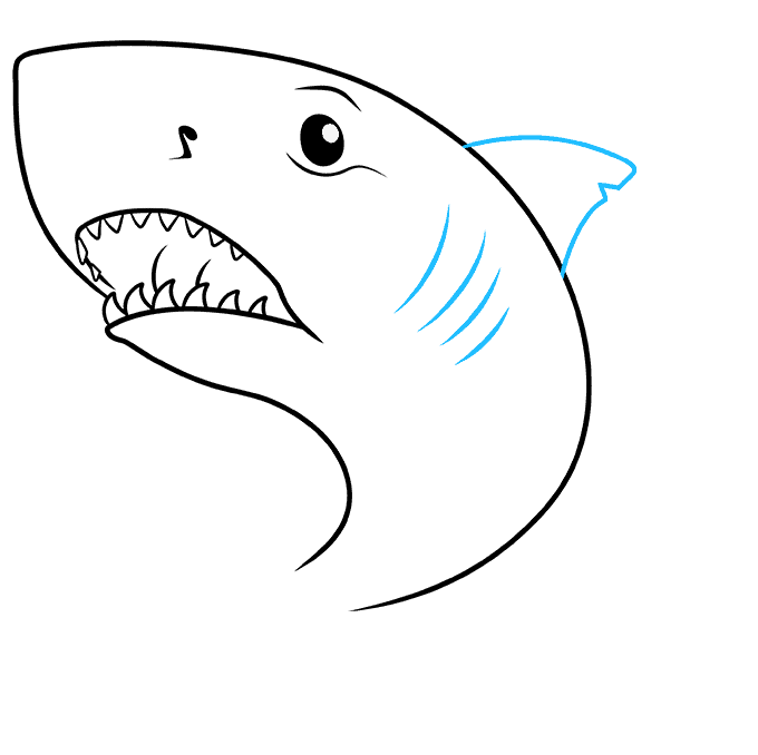 How to Draw Great White Shark: Step 6