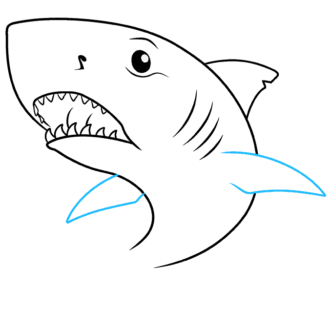 How to Draw Great White Shark: Step 7