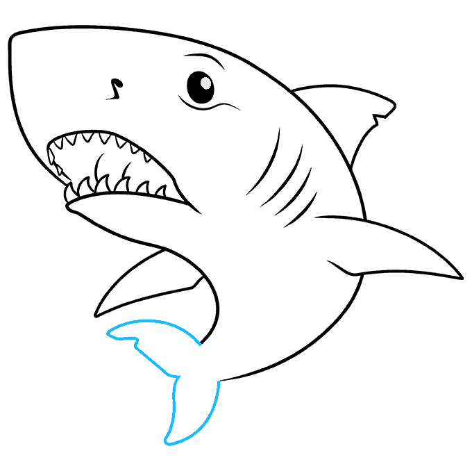 How to Draw Great White Shark: Step 8