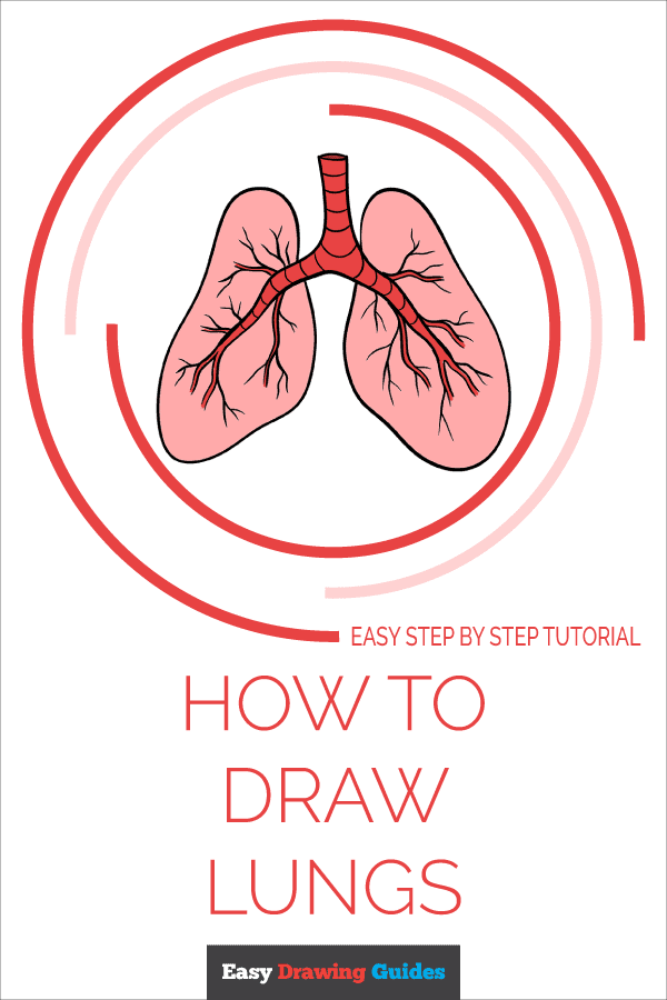 How to Draw a Lungs Pinterest Image