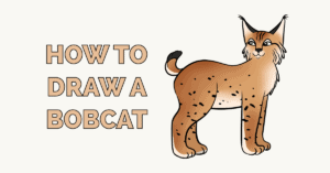 How to Draw a Bobcat Featured Image