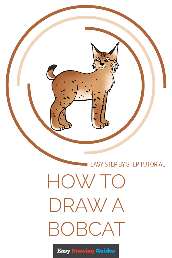 How to Draw Bobcat | Share to Pinterest