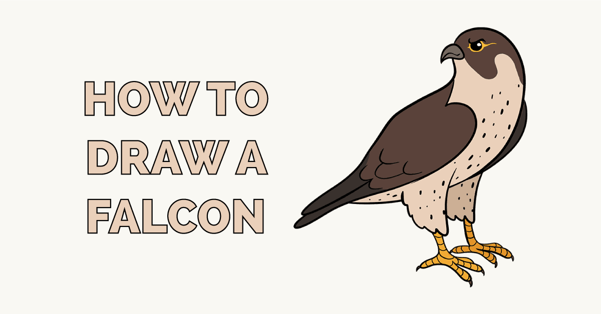 How to Draw a Falcon Featured Image