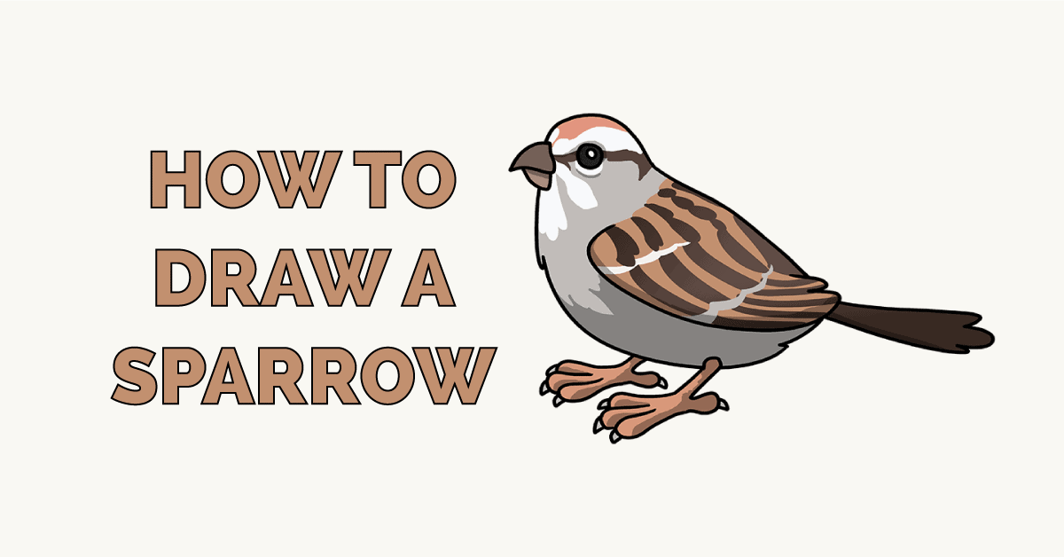 How to Draw a Sparrow Featured Image