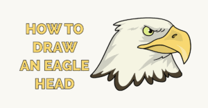 How to Draw an Eagle Head Featured Image