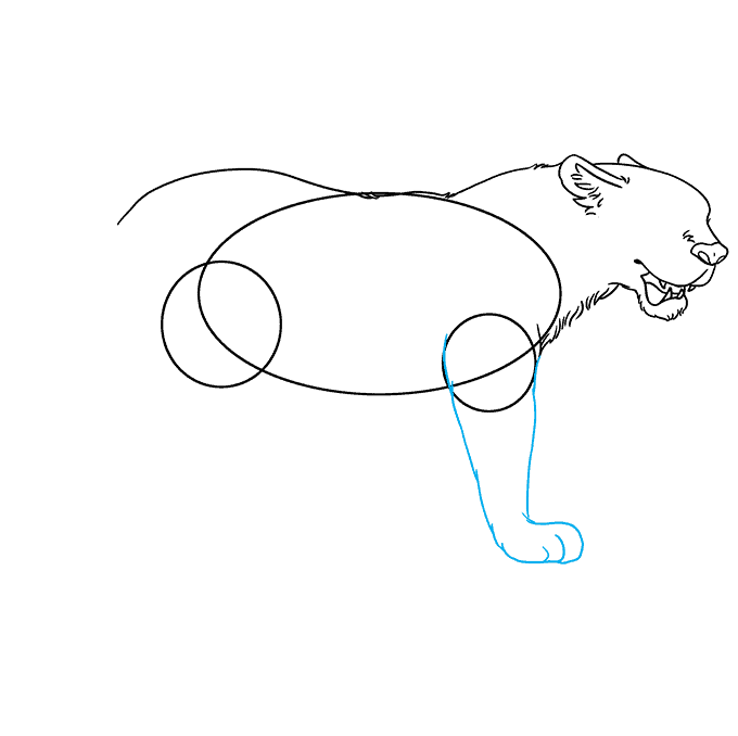 How to Draw Jaguar: Step 4