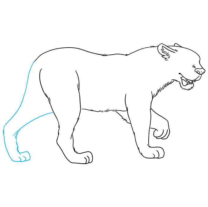 How to Draw Jaguar: Step 6