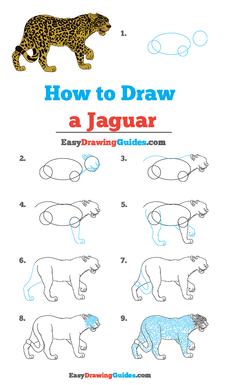 How to Draw Jaguar