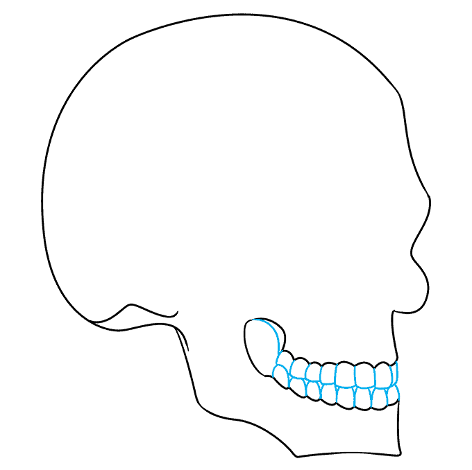 How to Draw Skull in 3/4 View: Step 5