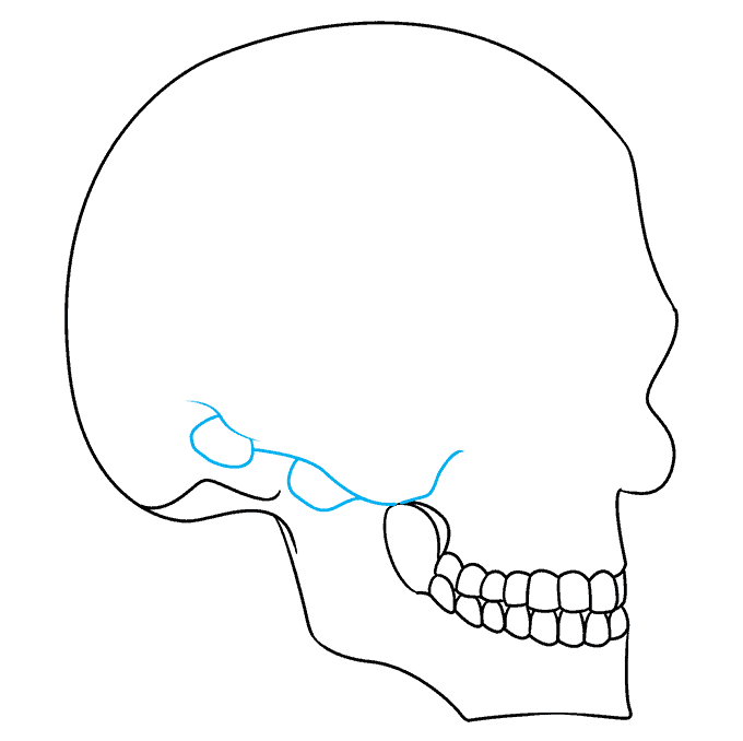 How to Draw Skull in 3/4 View: Step 6