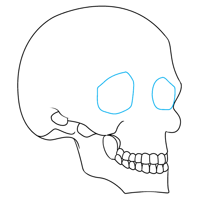 How to Draw Skull in 3/4 View: Step 7