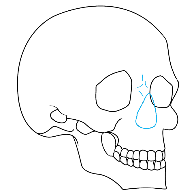 How to Draw Skull in 3/4 View: Step 8