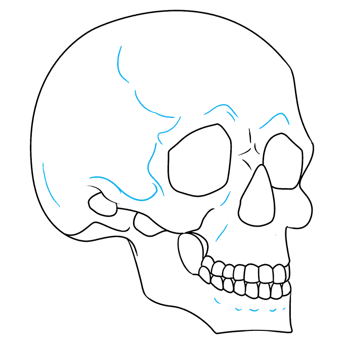How to Draw Skull in 3/4 View: Step 9