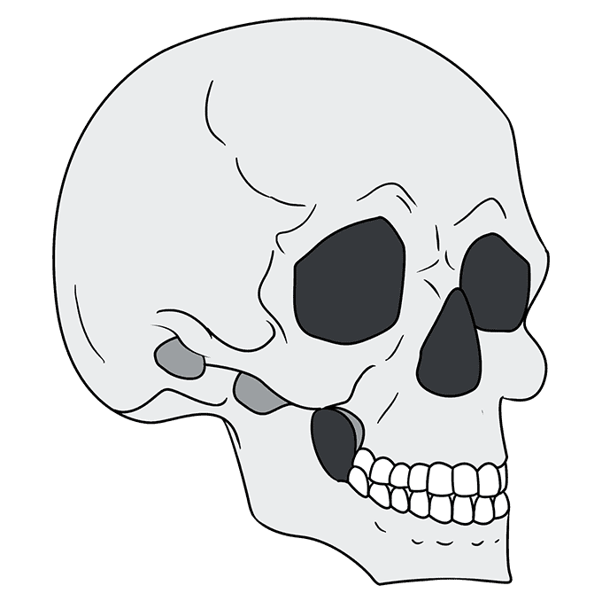 How to Draw Skull in 3/4 View: Step 10