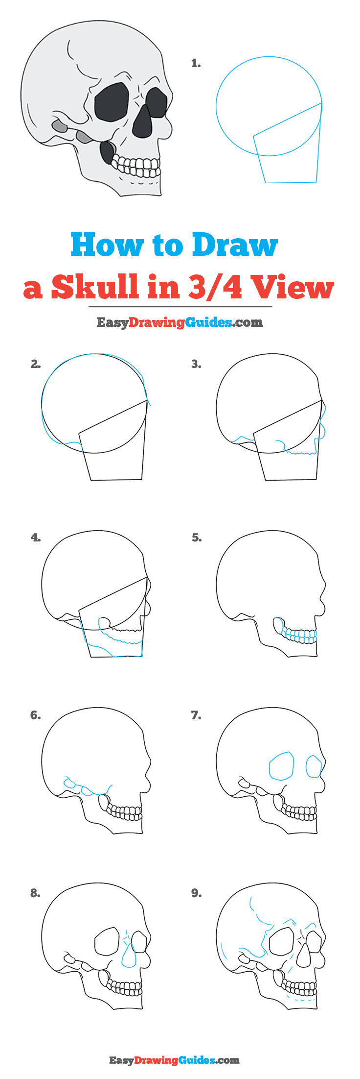 How to Draw Skull in 3/4 View