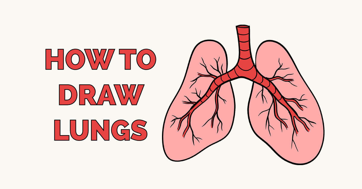 How to Draw a Lungs Featured Image
