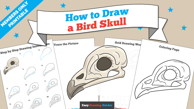 download a printable PDF of Bird Skull drawing tutorial