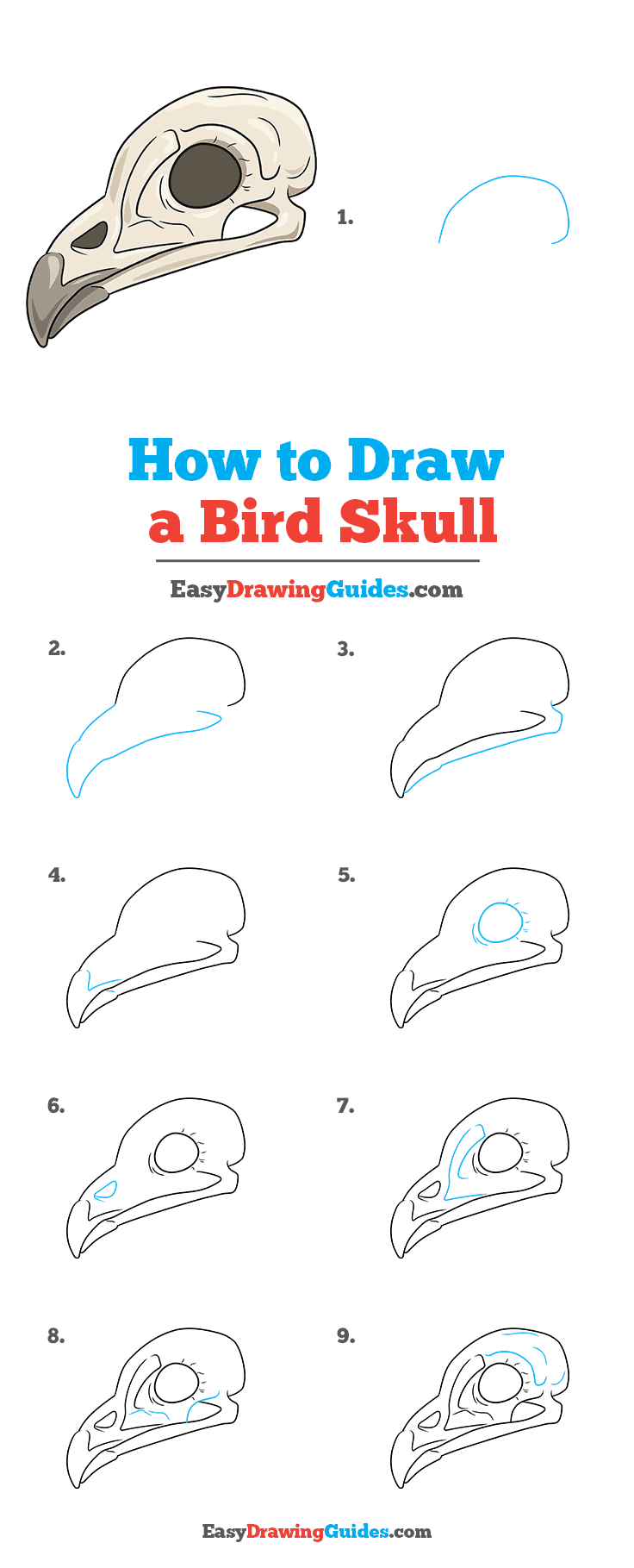 How to Draw a Bird Skull Step by Step Tutorial Image