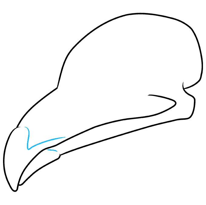 How to Draw Bird Skull: Step 4