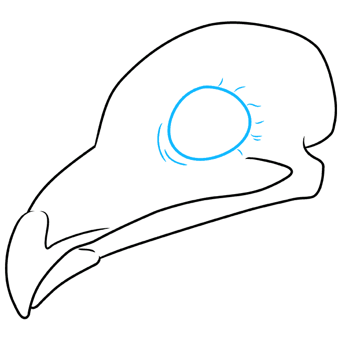 How to Draw Bird Skull: Step 5