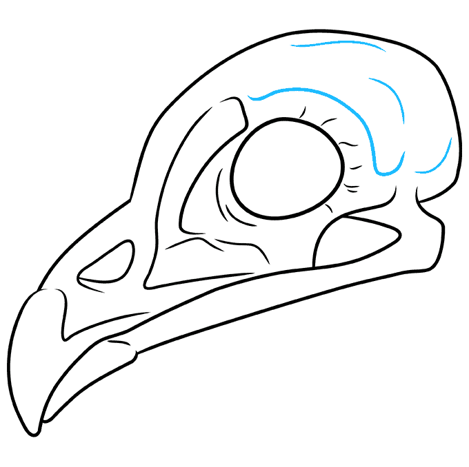 How to Draw Bird Skull: Step 9