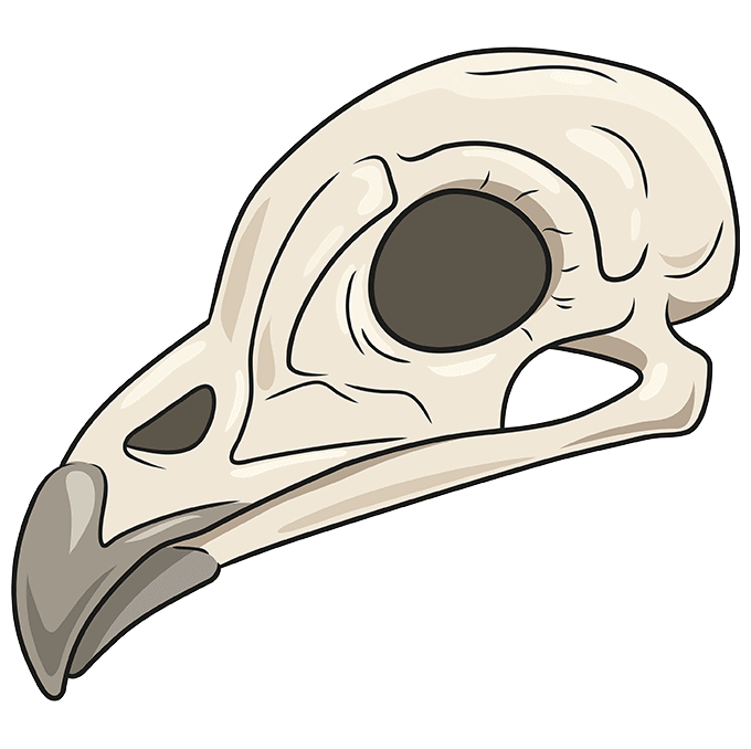 How to Draw Bird Skull: Step 10
