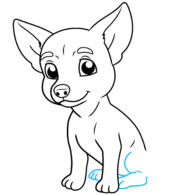 How to Draw Chihuahua: Step 8
