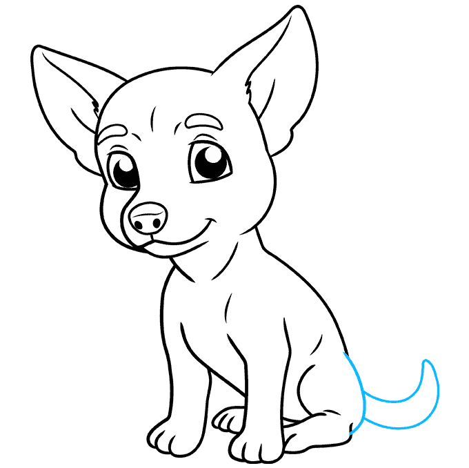 How to Draw Chihuahua: Step 9