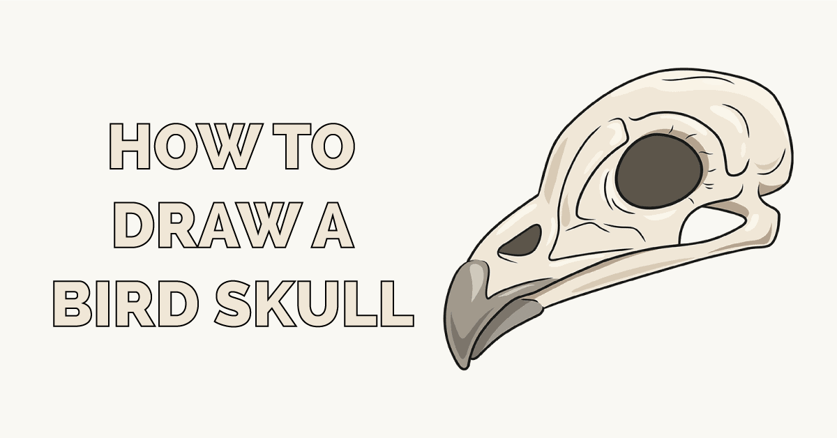 How to Draw a Bird Skull Featured Image