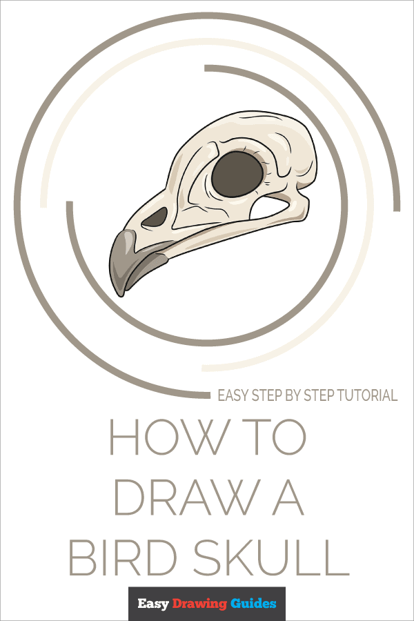 How to Draw Bird Skull | Share to Pinterest