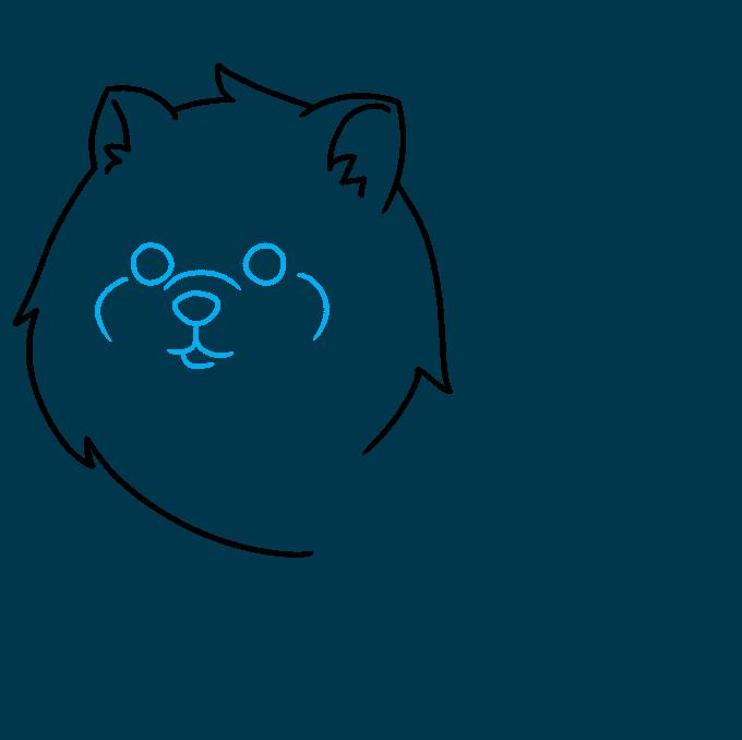 How to Draw a Pomeranian Step 03