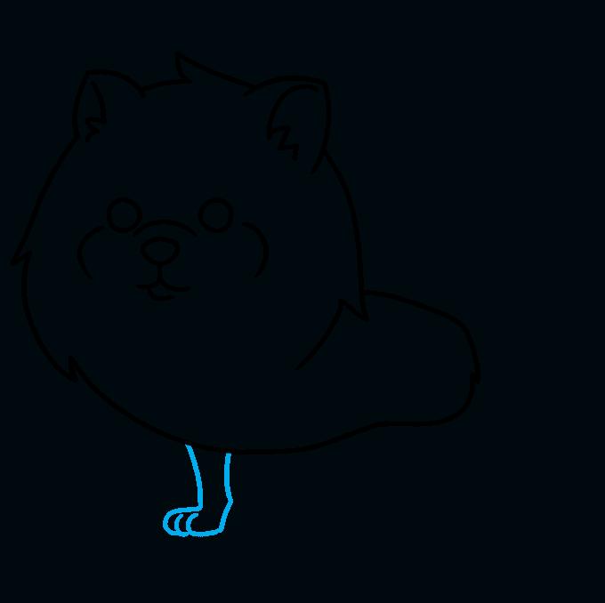 How to Draw a Pomeranian Step 05