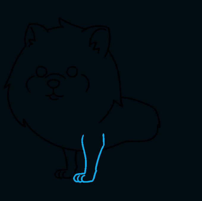 How to Draw a Pomeranian Step 06