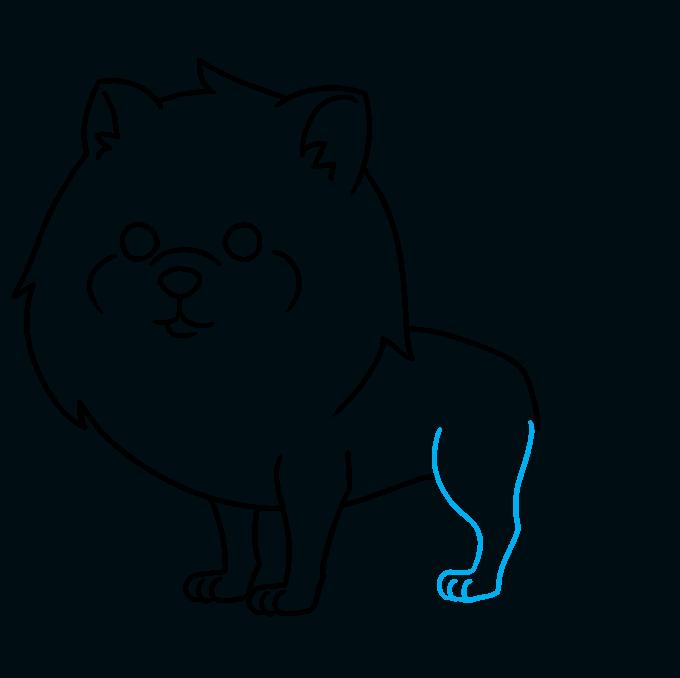 How to Draw a Pomeranian Step 07