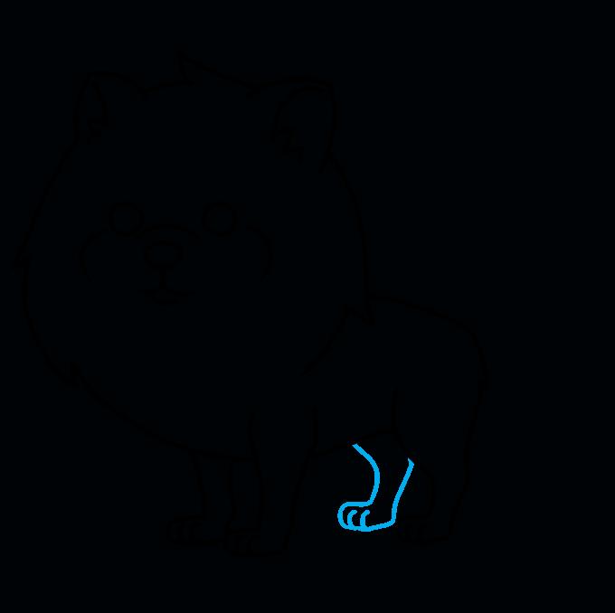 How to Draw a Pomeranian Step 08