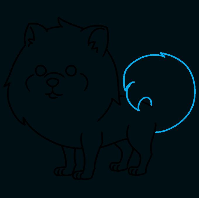 How to Draw a Pomeranian Step 09