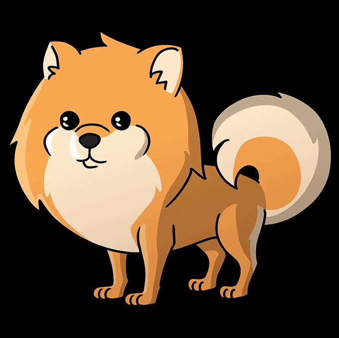 How to Draw a Pomeranian Step 10