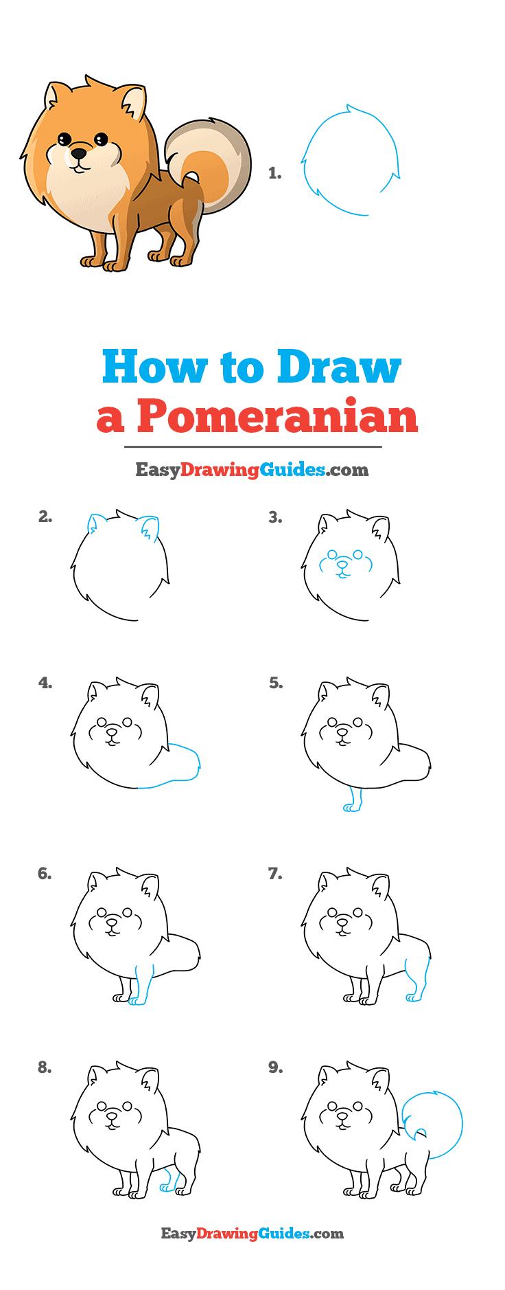 How to Draw Pomeranian