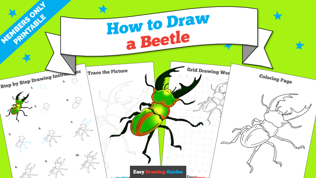 download a printable PDF of Beetle drawing tutorial