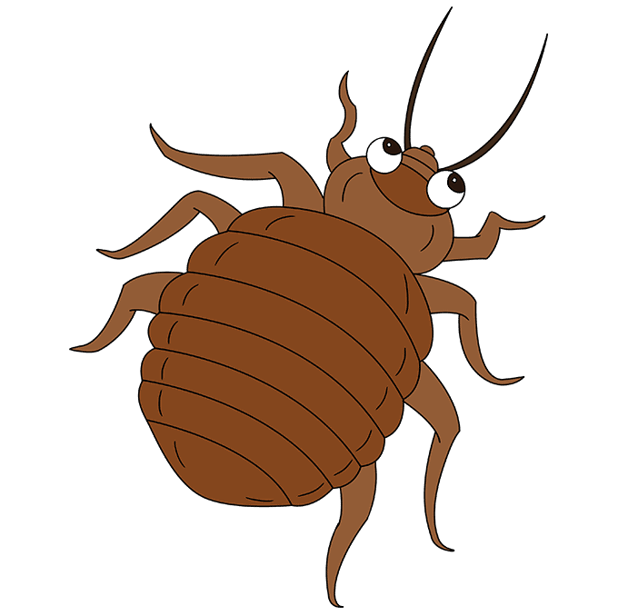 How to Draw Bed Bug: Step 10