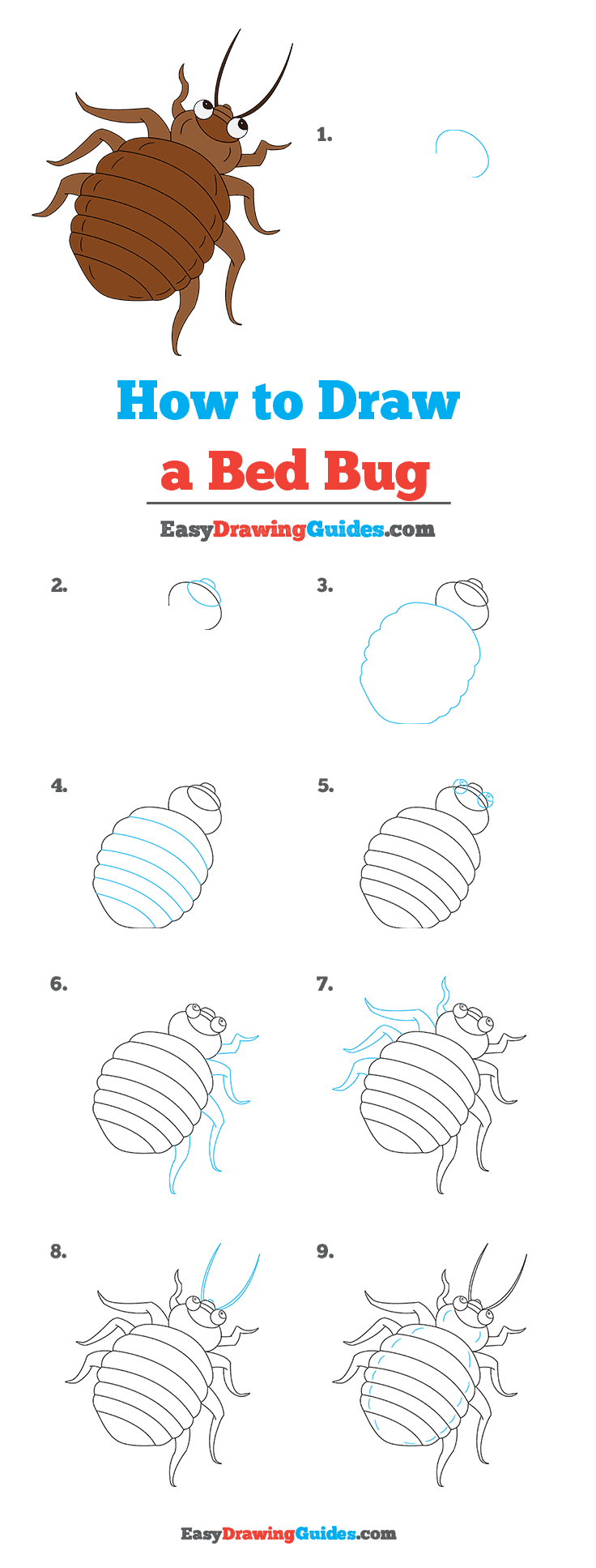 How to Draw Bed Bug